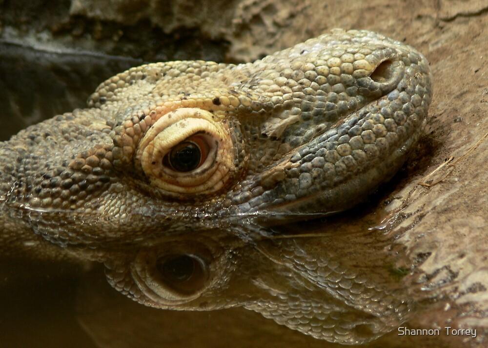 Komodo dragon by Shannon  Torrey