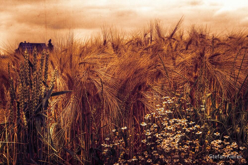 A rural view by Stefan Kierek