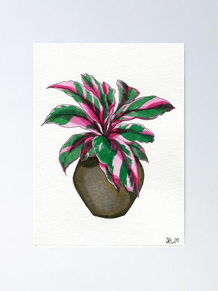 Alternate view of Pink Calathea  Poster