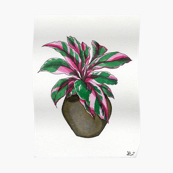 Pink Calathea  Poster