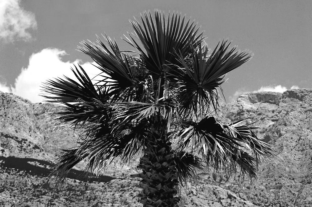 jaroslav kocian : palm by verivela