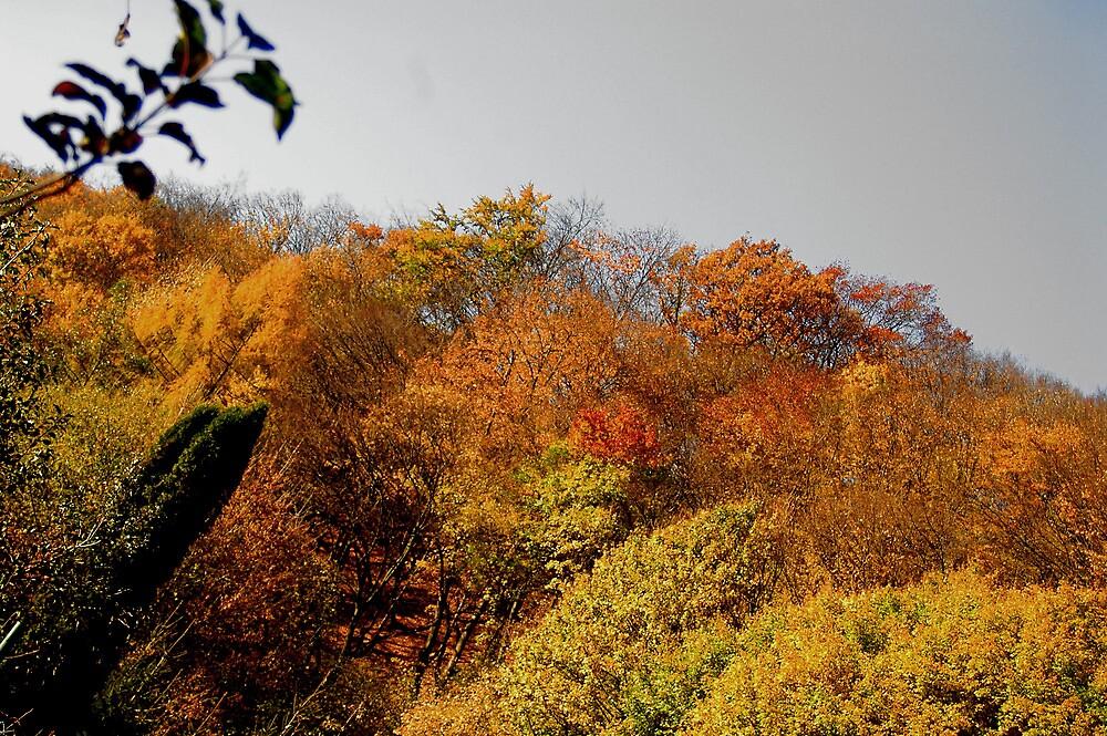 jaroslav kocian : autumn by verivela