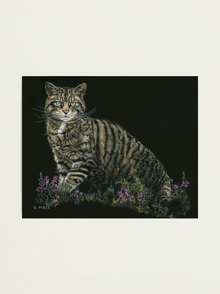 Alternate view of Last of the Highland Tigers Photographic Print