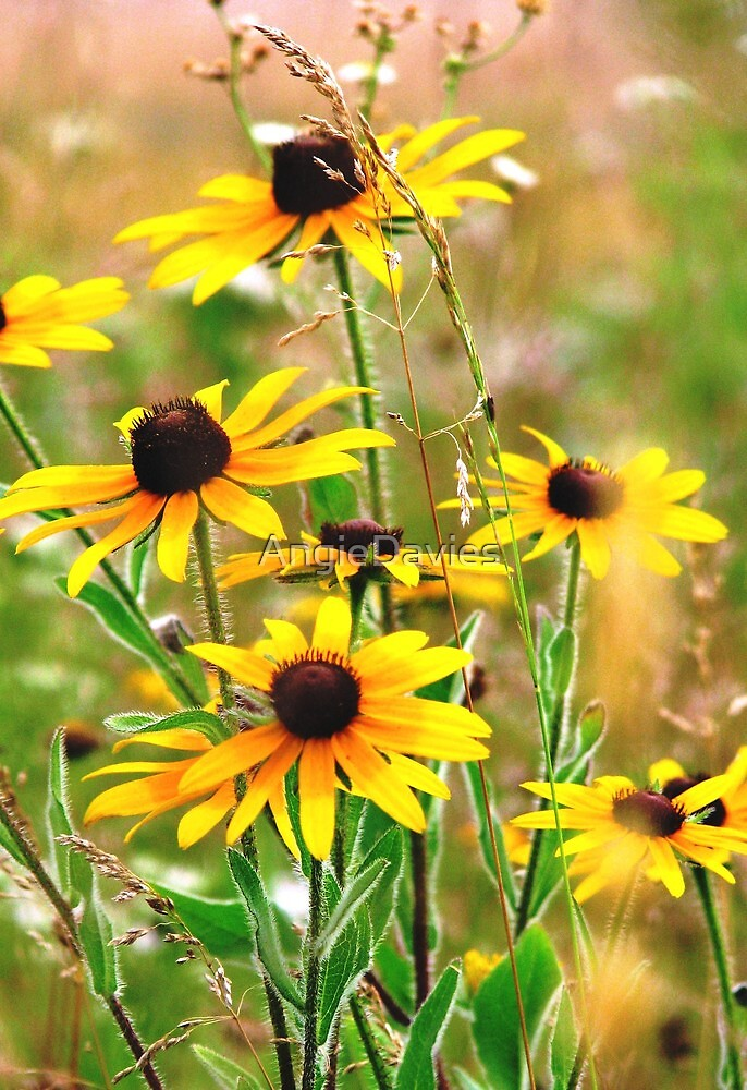 Summer Meadow by AngieDavies