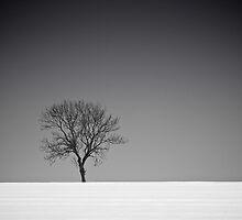 Lone Tree in Winter by eatsleepdesign