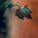 Autumn by Mark Smith