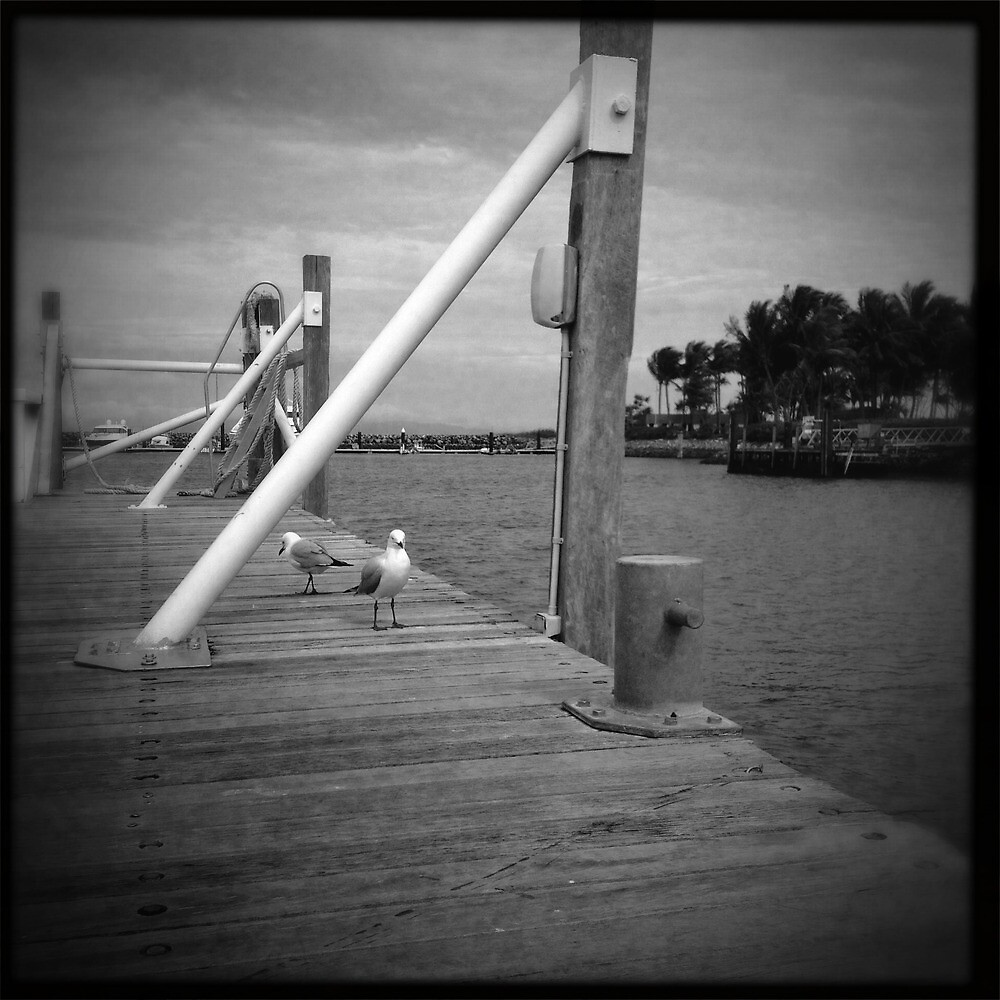 Seagulls by Niki Smallwood