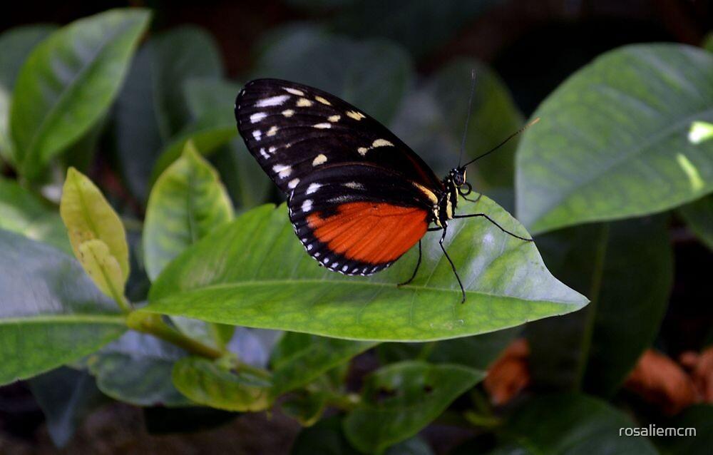 Little Butterfly by rosaliemcm