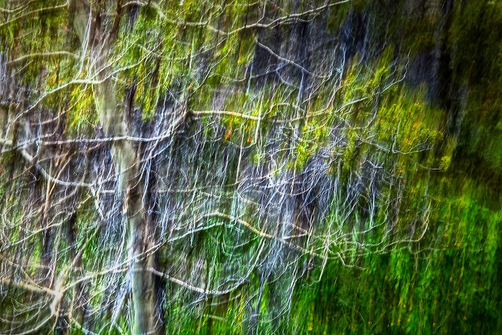Forest Impression No. 186 by Randall Nyhof