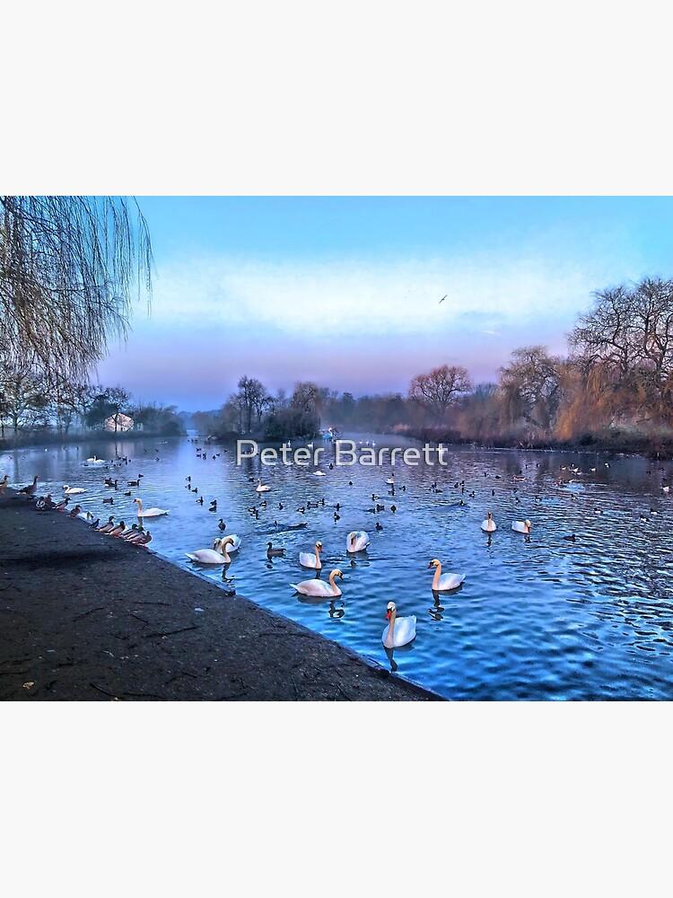 Swan lake.  by hartrockets