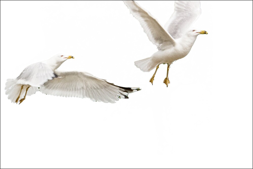 White on White, Gulls in Flight No. 2003 by Randall Nyhof