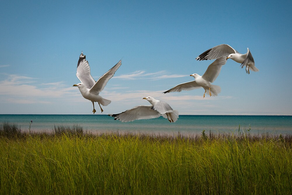 Gulls by a Lake Michigan Shore by Randall Nyhof