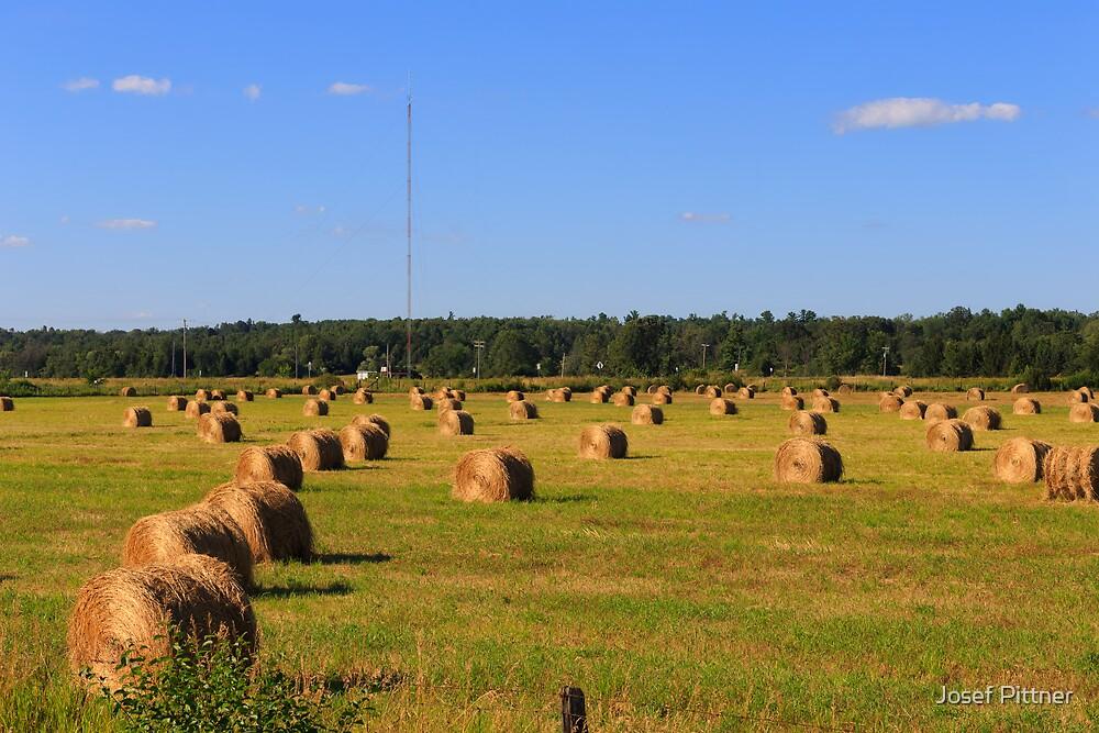 Hay Fields by Josef Pittner