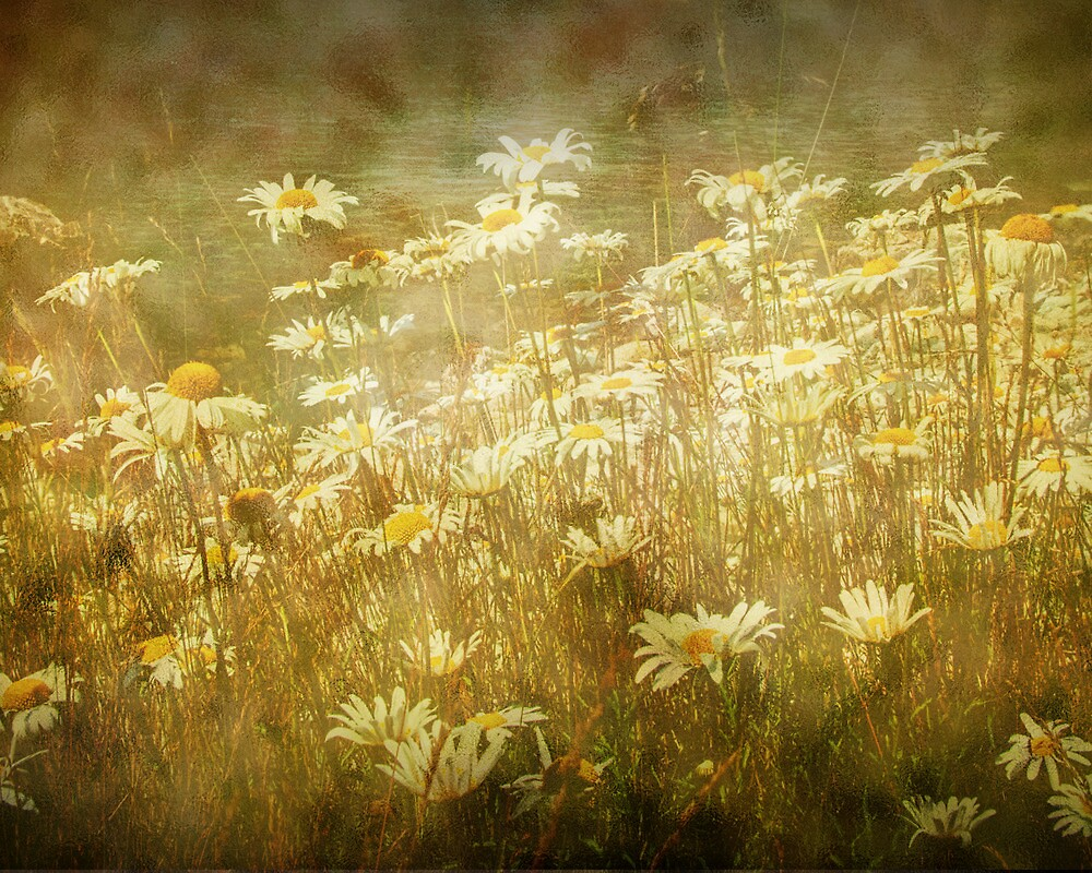 Sun bathed Daisies along a Stream Shore by Randall Nyhof