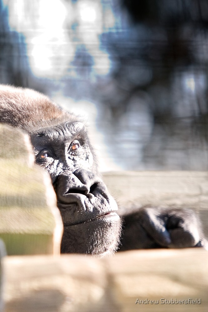 Peaceful Gorilla by AWS-PHOTOGRAPHY