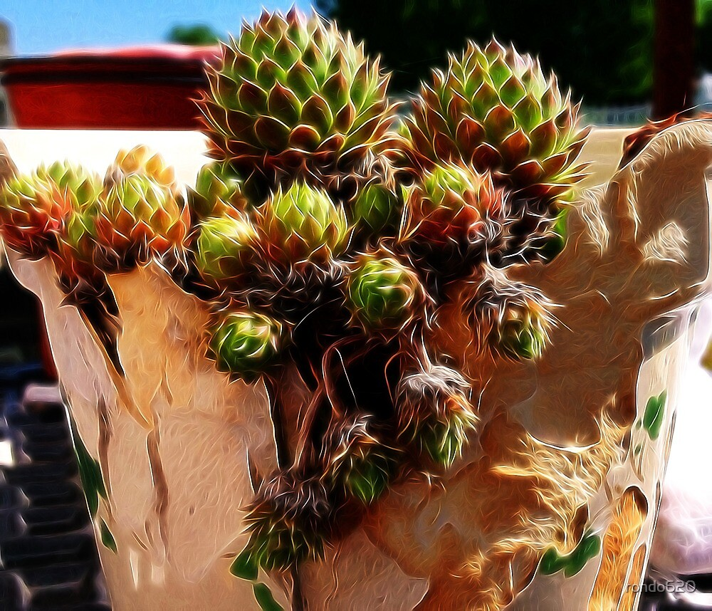 Hens and chicks in a broken pot by rondo620