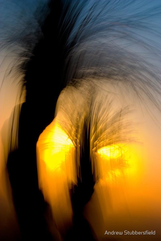 Bunya Dreaming by AWS-PHOTOGRAPHY