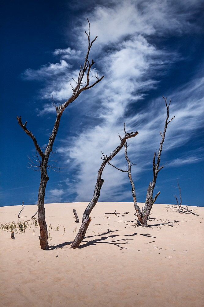 Silver Lake Dune with Dead Trees and Cirrus Clouds by Randall Nyhof