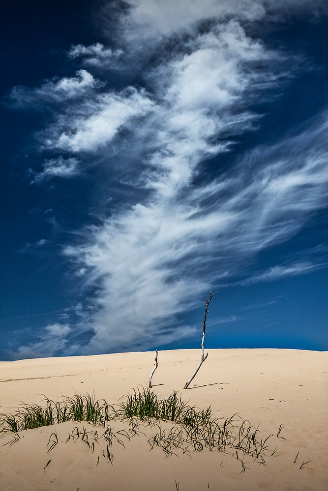 Silver Lake Dune with Grass, Dead Trees and Cirrus Clouds by Randall Nyhof