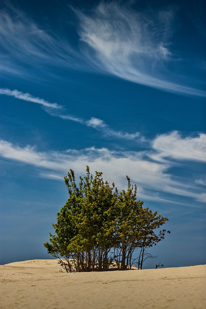 Silver Lake Dune with Tree Grove and Cirrus Clouds by Randall Nyhof