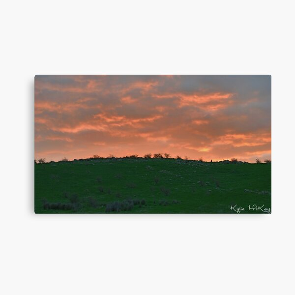 sunset roo Canvas Print