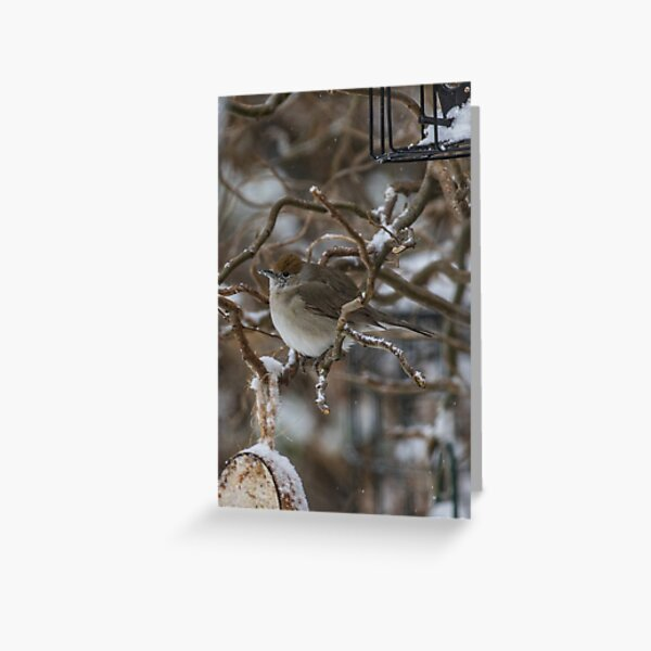 Blank wildlife Christmas card Greeting Card