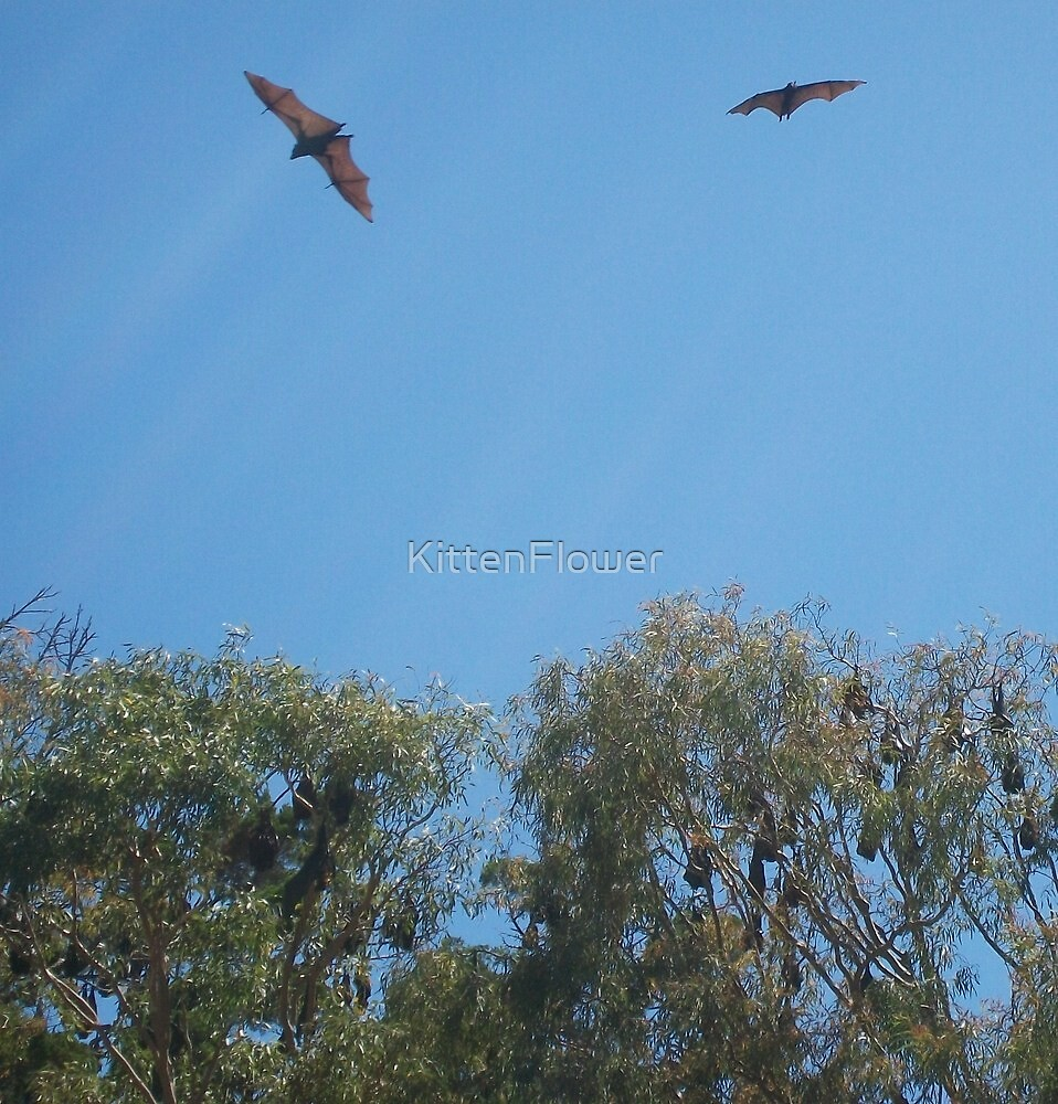 Flying Foxes in Flight by KittenFlower