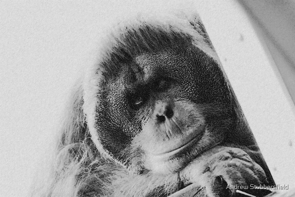 Orangutan  by AWS-PHOTOGRAPHY