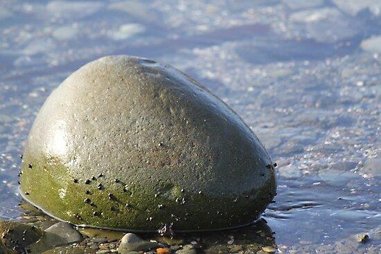 Green Ocean Rock by Molly Quinn