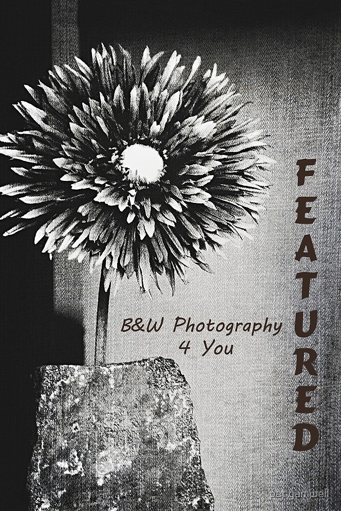B&W Photography 4 You...Feature Banner by pat gamwell