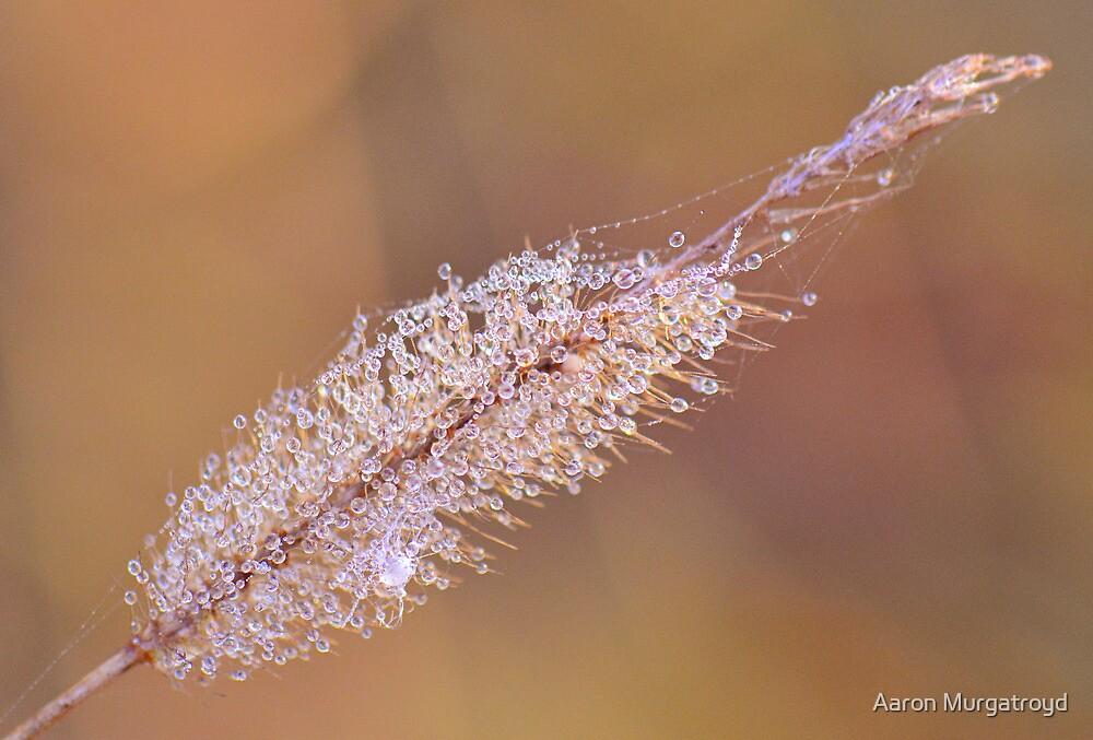 Morning Dew by Aaron Murgatroyd