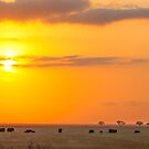 Sunrise of the Elephants  by Pippa Carvell