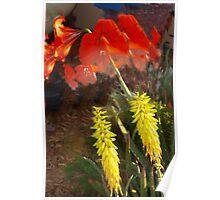 Aloe and allamanda Poster