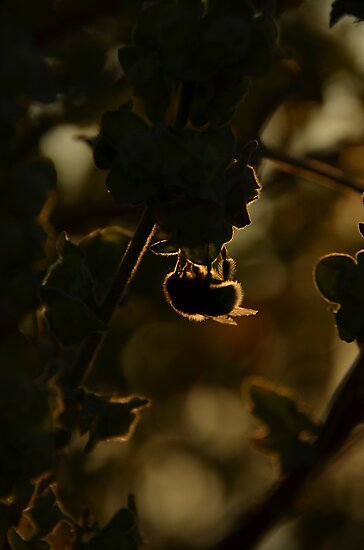 silhouette Bee! by crystalballoon