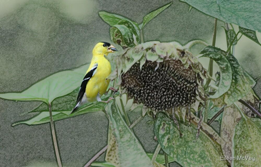 Yellow Goldfinch by Eileen McVey