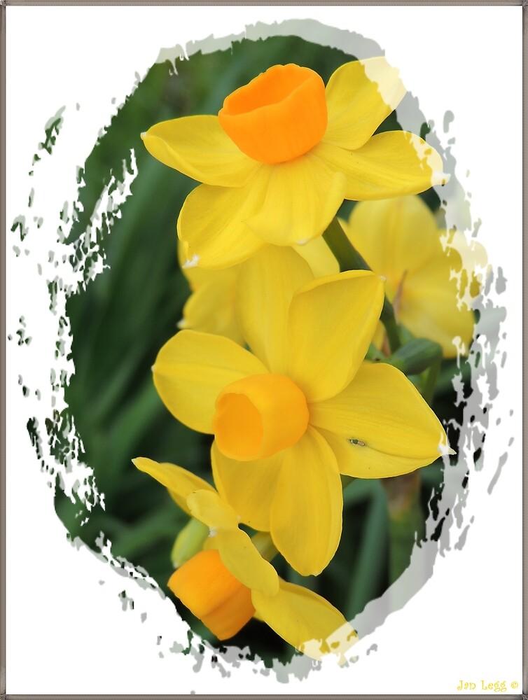 Daffodil in Winter by Jan Legg