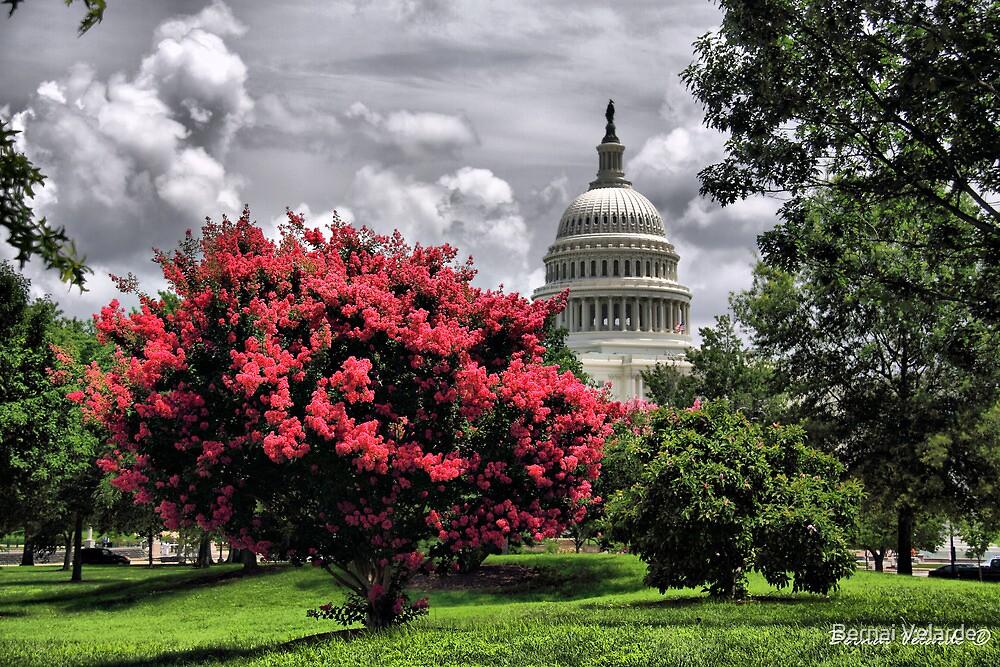 The Capitol Building by Bernai Velarde PCE 3309