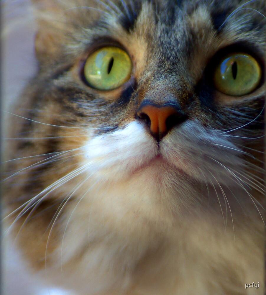 726 Kitty by pcfyi