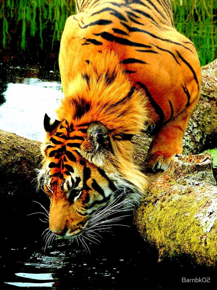Drinking Tiger by Barnbk02