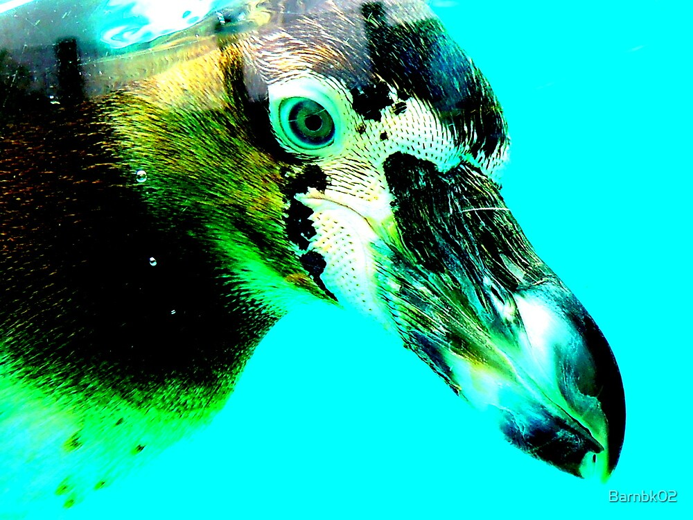 Blue Eyed Penguin by Barnbk02