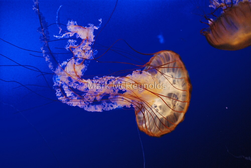 Jelly Fish 1 by Mark McReynolds