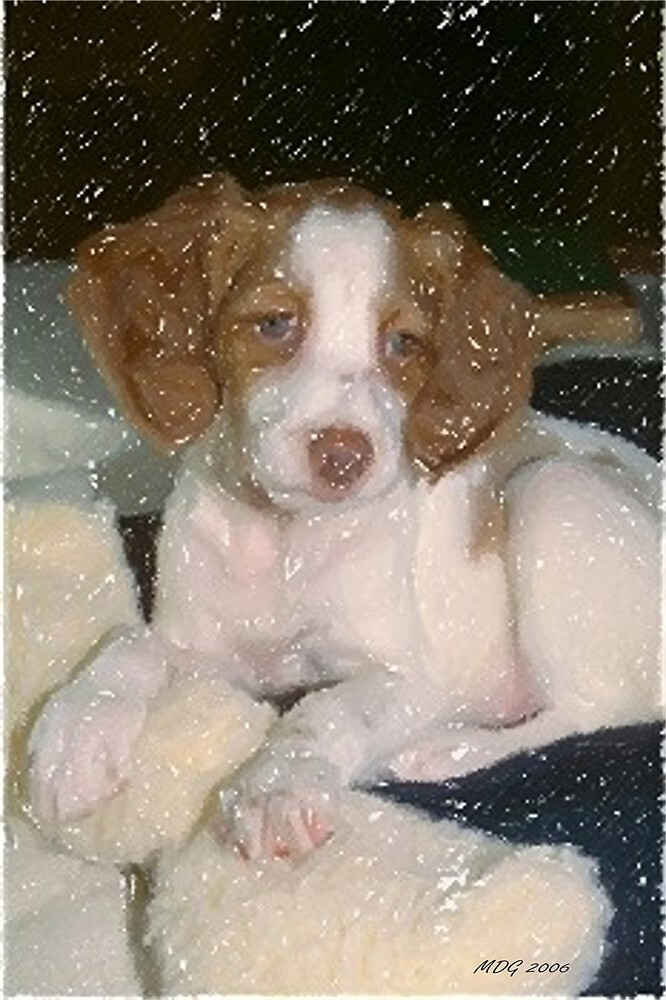 Brittany Spaniel Dog Portrait  by Oldetimemercan