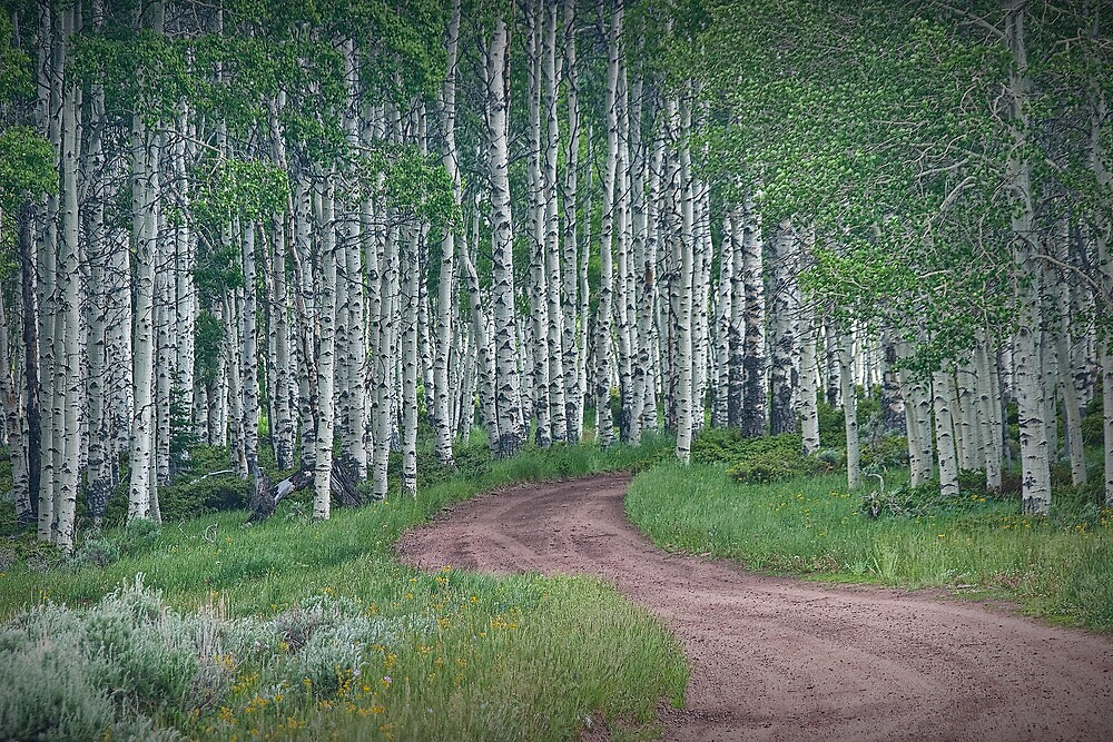 Roadway through a Birch Tree Grove by Randall Nyhof