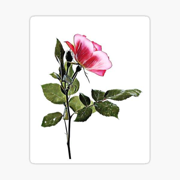 Rosey  Sticker