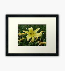 Big Yellow Lily Framed Print