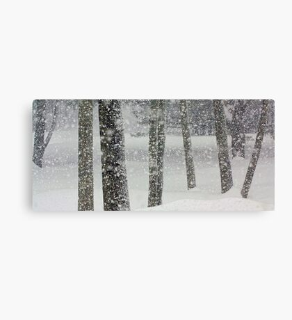 Snow-Squall -- While Walking In The Woods Canvas Print