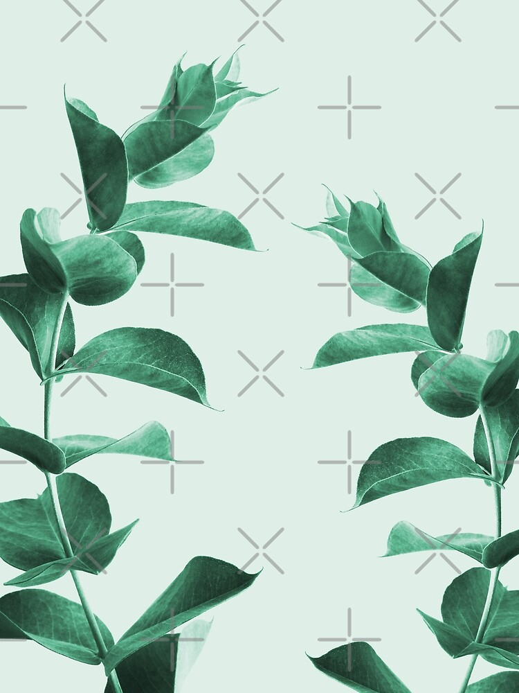 Eucalyptus green by ColorsHappiness