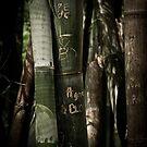 Botanic Bamboo by mewalsh