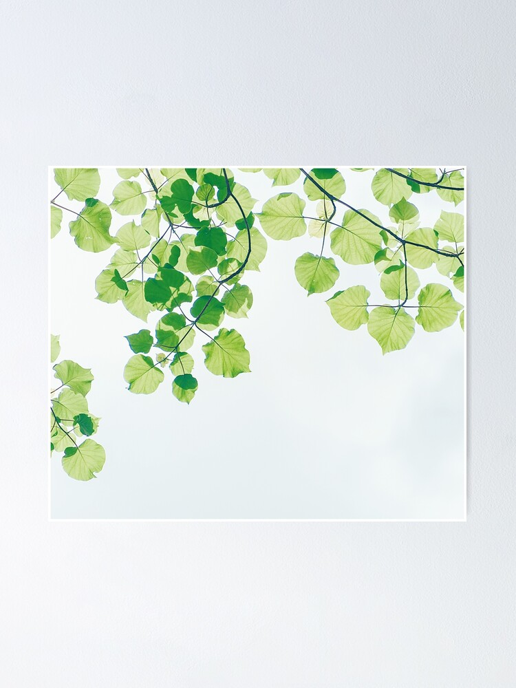 Alternate view of Summer leaves Poster