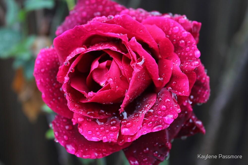 Rose in the rain by Kaylene Passmore